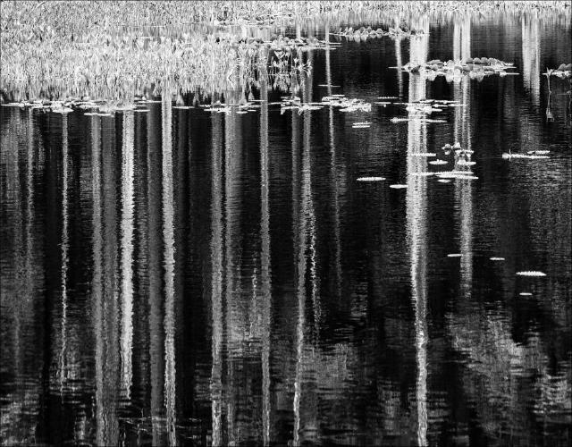Forest Pond - Kate Jackson