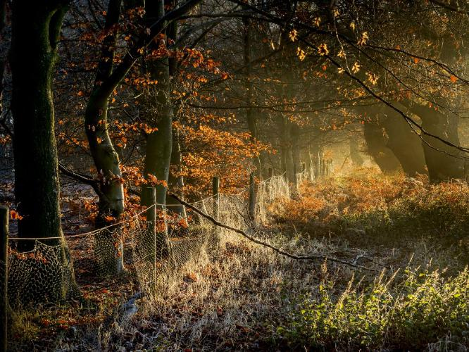 Late November in Pods Wood - Kate Jackson