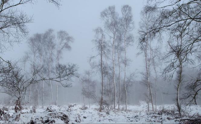 Misty Trees - Kate Jackson