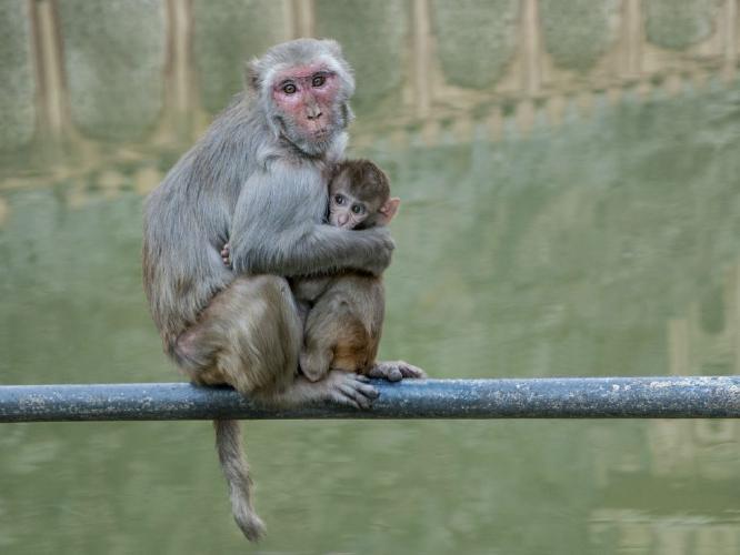 Temple Monkeys - Kate Jackson