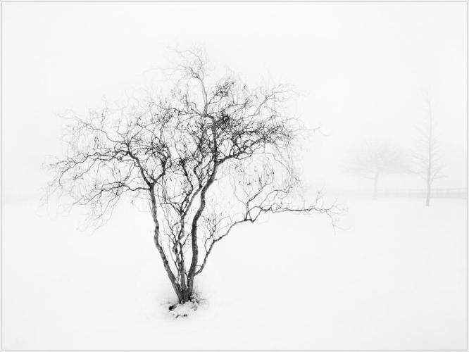 Winter Tree - Kate Jackson