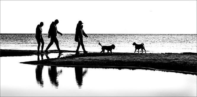 Walking The Dogs - Martin Leech