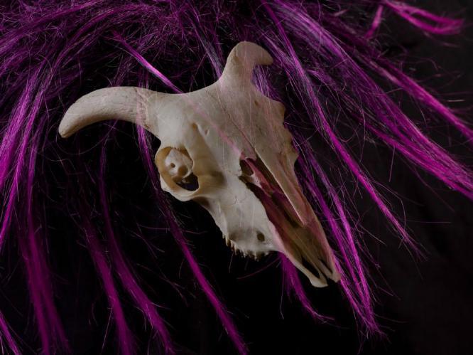 Skull - Phil Brew