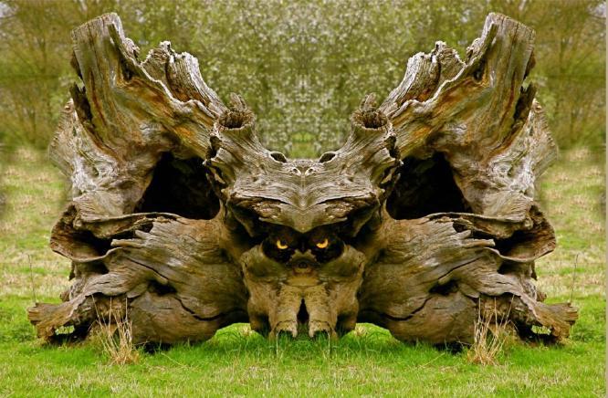 eagleowl - Phil Brew