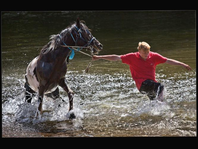 The Reluctant Horse - Rodney Woods