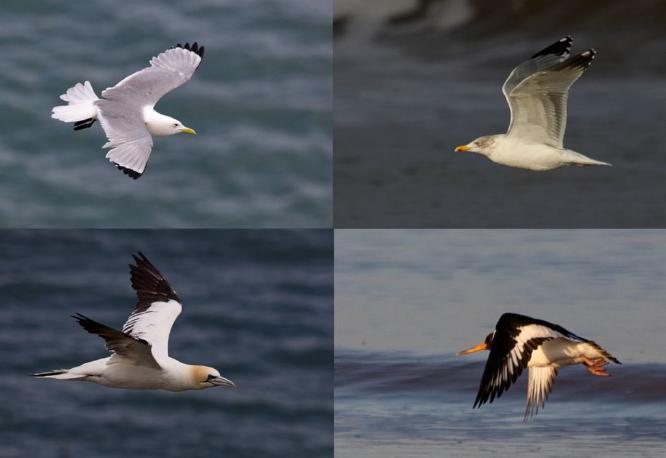 Birds in Flight - Steve Robinson