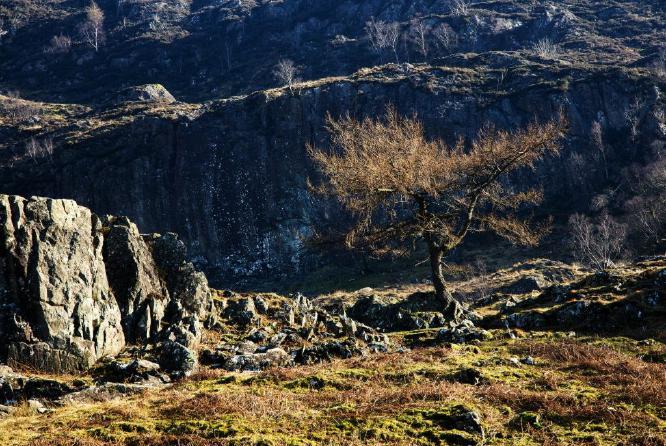 Sunlit Tree in Watendlath - Steve Robinson