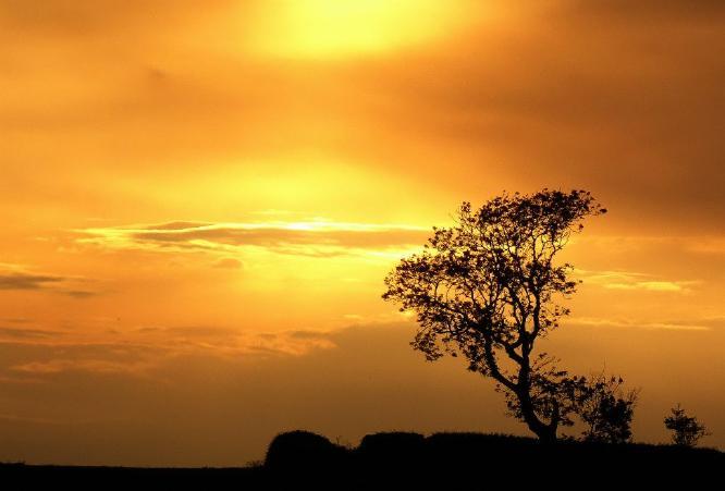 Sunset Silouette - Steve Robinson