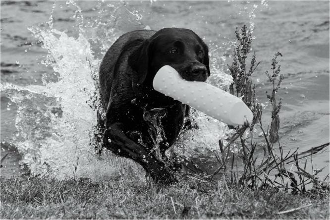 Dog Training - Terry Stone
