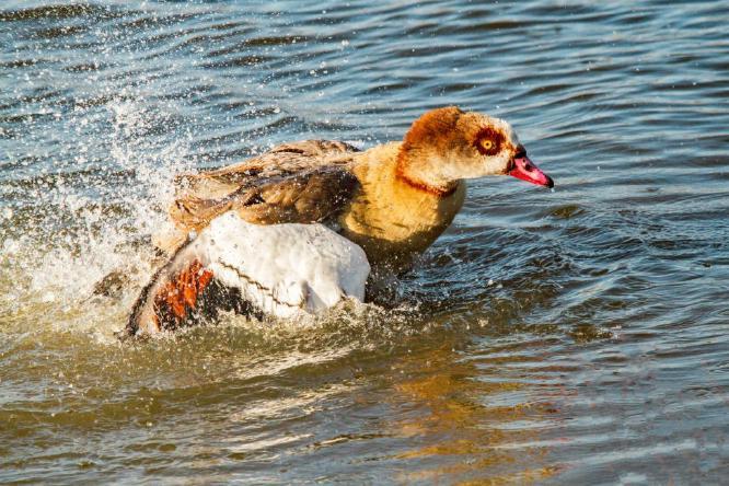 Having a splashing time - Terry Stone