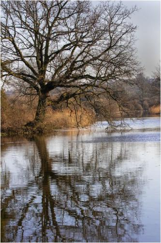 Reflection Over Beeleigh - Terry Stone